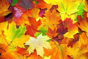 fall-leaves-essential-oil
