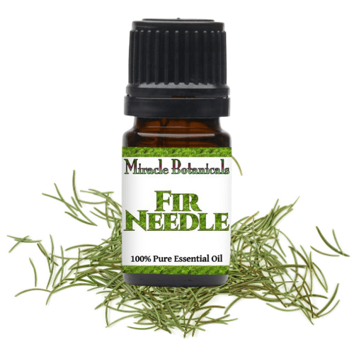 Fir Needle Essential OIl with Pine Needles