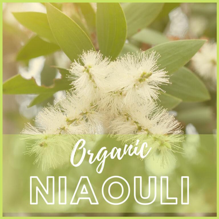 niaouli-essential-oil