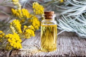 Helichrysum Splendidum: From African Medicine to Modern Aromatherapy