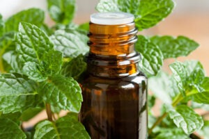 5 Useful Benefits of Spearmint Essential Oil