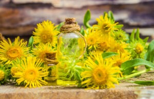 Inula flower essential oil
