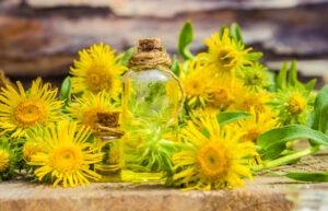 Inula flower essential oil