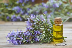 Rosemary essential oil and plant with flowers.
